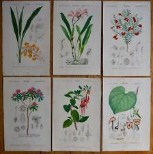 Lot N°7 de 6 Planches Botanique D' Orbigny Histoire Naturelle 1849 Gravures