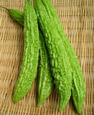 FD1173 Balsam Pear Seed Bitter Melon Organic Vegetable 1 Pack 10 Seeds Free Ship