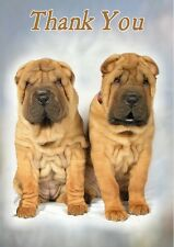 Shar Pei Dog Thank You Card By Starprint