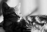 Cat Card. Cute tabby cat blank greeting card. Cat birthday Card. Black & White.
