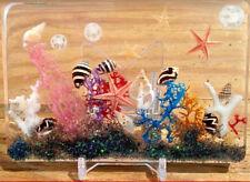 Novelty Home Decor Ocean Sea Shells Beach Art Ornament Paperweight Nautical ss63
