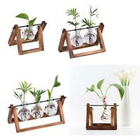 Hydroponic Plant Clear Vase Wooden Frame Glass Tabletop Plant Bonsai Homes Decor