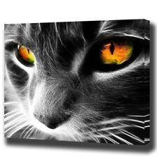 Paint By Number Kit Black White Cat Eyes Portrait Art DIY Picture 40x50cm Canvas
