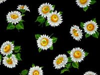 FAT QUARTER  FABRIC  DAISY FIELD  DAISIES  FLOWERS ON BLACK  CALICO  100% COTTON