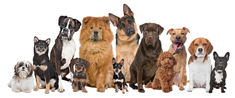 DOG STUFF by Howz Ya Dog