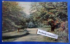 Original Vintage Postcard High Beach Walk Epping Forest  Essex