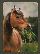 SINGLE SWAP PLAYING CARD HORSES HORSE MUNCHING ON GRASS