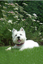 WESTIE HAPPY, HAPPY GARDEN FLAG FREE SHIP USA  RESCUE