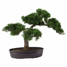 16-in. Cedar Bonsai Silk Tree, Green