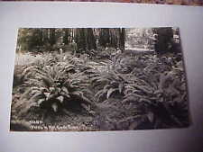 Vintage RPPC Real Photo Postcard Ferns in the Mill Creek Grove FREE SHIP