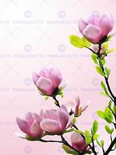 MP PHOTO PLANT NATURE FLOWER TREE BLOSSOM MAGNOLIA SPRING PINK POSTER CC6016