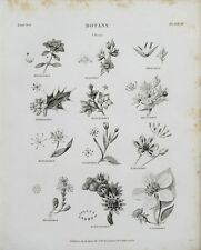 1802 Botany Classes Engraving Print Rees Plate II