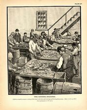Rare 1887 Antique Fisheries Fish Print ~ The Sardine Fishery ~ Collection #2