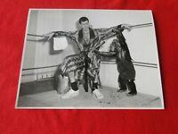 Vintage Original Comedian Jerry Lewis w Monkey Hollywood Photo                H3