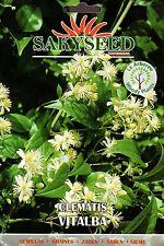30 Semi/Seeds CLEMATIS VITALBA