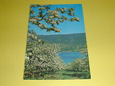 Beautiful Okanagan Valley Kalamalka Lake B.C.Postcard Canada