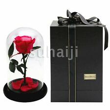 Beauty and the Beast Enchanted Rose Fairy Tale Belle Glass Prop Decor Gift Red