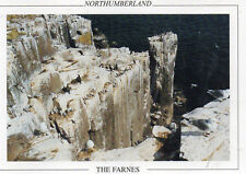 Postcard  Northumberland The Farnes  unposted
