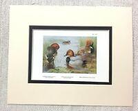 1929 Vintage Uccello Stampa Ferruginous Duck Rosso Crested Moriglione Archibald