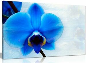 Blue Orchid Flower Canvas Wall Art Picture Print