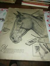 How to Draw Horses by Walter T. Foster