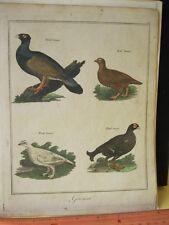 Vintage Print,GROUSE,Dublin,Plate 18,1792