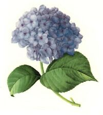 "4 Hortensia Blue Lilac Flowers 2"" X 1-1/2"" Waterslide Ceramic Decals Xx"