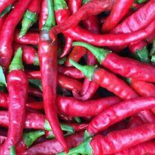 10 Organic Cayenne Heirloom American Hot Pepper Seeds