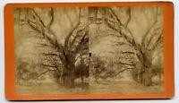 Bonaventure Cemetery , Savannah GA Vintage Stereoview Photo by J.N. Wilson