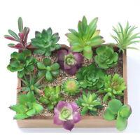 Artificial Succulents Plant Garden Miniature Fake Cactus Home Floral Decors DIY