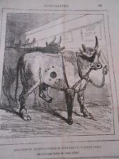 Typo Caricature 1878 - Expo d'animaux le Boeuf Turc