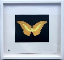 """Damien Hirst - """"PER ATTIRARE"""" - MOLTO RARA Firmato e Incorniciato Farfalla acquaforte. EDN del 75."""