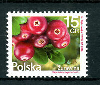 Poland 2016 MNH Cranberries Cranberry 1v Set Plants Fruits Fruit Stamps