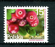 Poland 2016 MNH Cranberries Cranberry 1v Set Plants Fruits Fruit Stamps