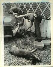 1983 Press Photo Police Officer Frank Hamer & other assisting dogs, Stapleton