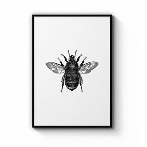 Bumblebee Drawing Insect Minimal Wall Art Print Poster Framed or Canvas