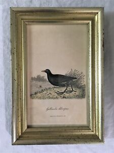 ANTIQUE PAIR OF GOLD FRAMED BIRD PRINTS, JARDINE, GRAVES,19th C, BRITISH