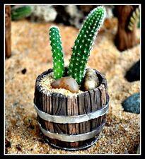 Cactus Garden Barrel Planter Miniature Fairy Gnome Hobbit Garden 16569