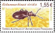fsat 2018 taaf  insects beetle insectes insekten Ectemnorhinus viridis 1v mnh **