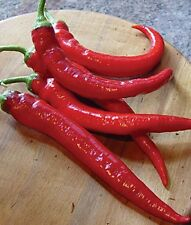 Paprika Chili Rote Teufele Samen