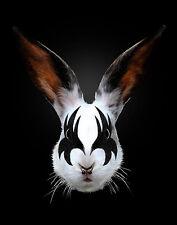 ART PRINT Rabbit Rocks Kiss of a Rabbit Robert Farkas 11x14