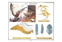 PIGEON BIRD ANATOMY POSTCARD - FRENCH LANGUAGE - LE PIGEON - NEW & PERFECT