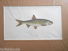 ANTIQUAIRE dobule Fish Print c1880 main couleur, poissons/Pêche À La Ligne/UK Pêche