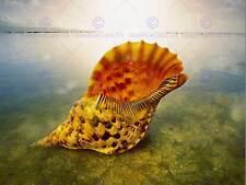 PHOTOGRAPHIE NATURE Shell Ocean Water îles Seashore FINE ART PRINT CC1560