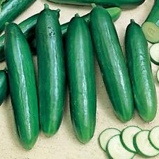 20 Beit Alpha (Lebanese) CUCUMBER seeds  - foil pack ~ Yes we send to Tas