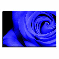 Rose Floral Single Canvas Wall Art Picture Print 9