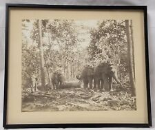 Antique Photograph Burma Working Elephants DARWOOD & CO. SHWE LEE FOREST 2 OF 3