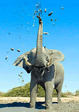 3D and Motion Postcard - African Elephant Mudbathing (273ML)