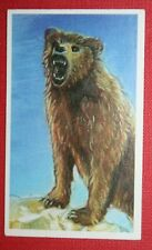 GRIZZLY BEAR   Superb Illustrated Card  Unmounted