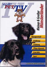 Kleiner & Großer Münsterländer - Meister PETz TV *DVD*NEU* Ratgeber - Hund